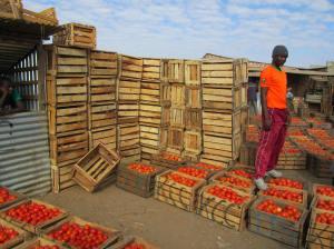 A Zambian Tomato Farmer