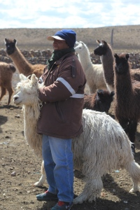 An alpaguero - alpaca rancher - with his flock in the Peruvian Andes.
