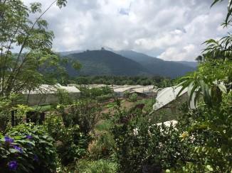 A Farm to Table restaurant in Antigua